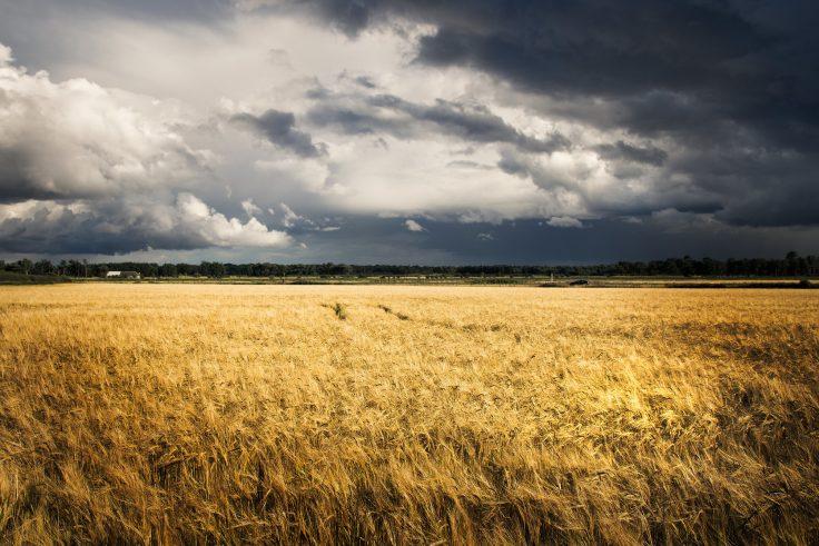 The weat field